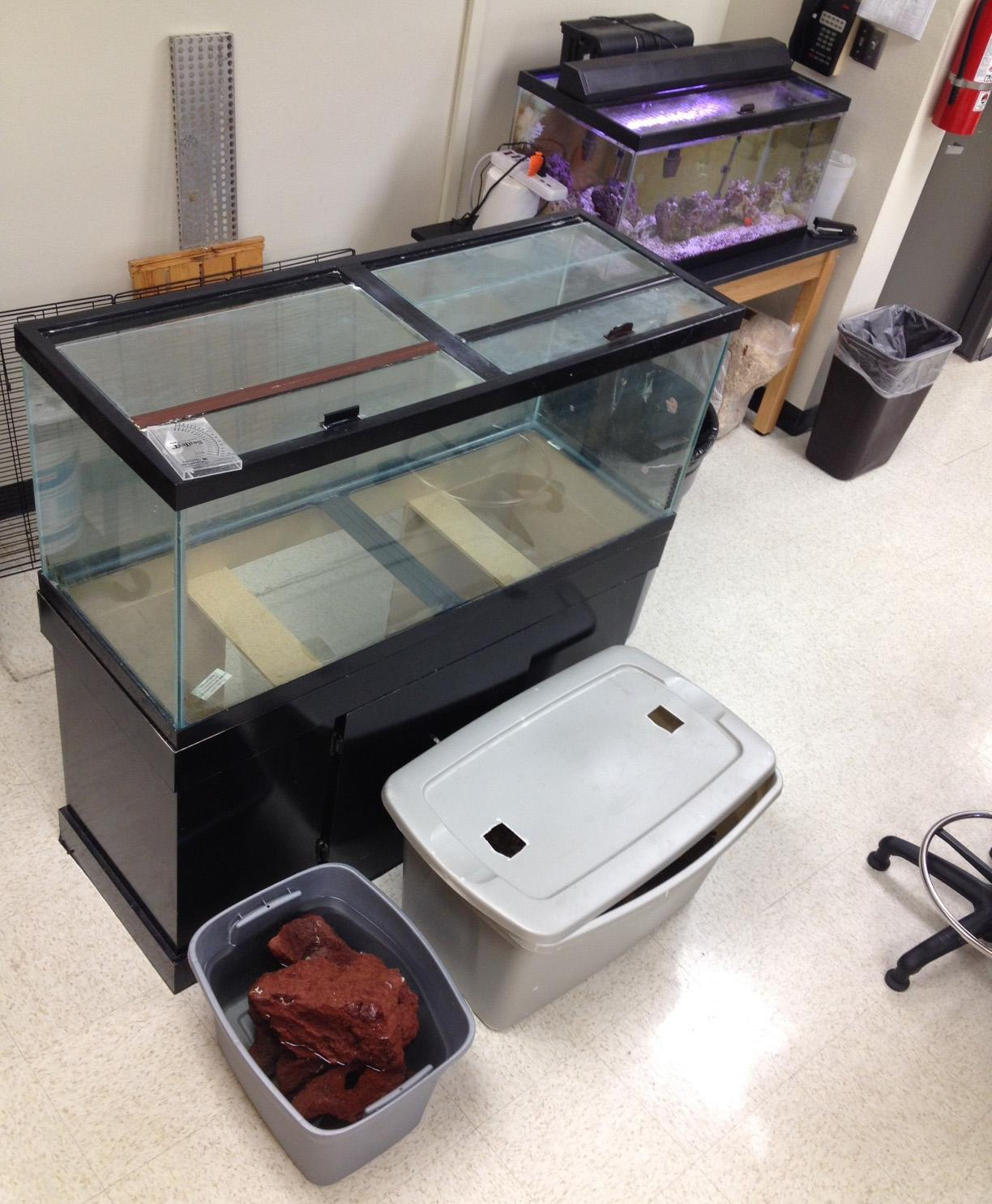 The large fish tank remains in the classroom, next to surviving animals in tubs. Science teacher Kyla Burns plans on taking the larger tank home and only using the smaller tank to hold the aquatic animals she uses for her classes.