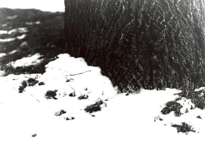 A snowy tree became the subject of senior Beau Johnson's Photo Art 2 Individualized Unit project. The picture was shot in Johnson's front yard. For his project Johnson focused on the zone system, which is a system that measures the amount of light that is exposed per unit of a photograph. . He focused on capturing the rough bark of the tree and soft snow helps emphasize different textures, and the darkness of the bark contrasting against the white snow.