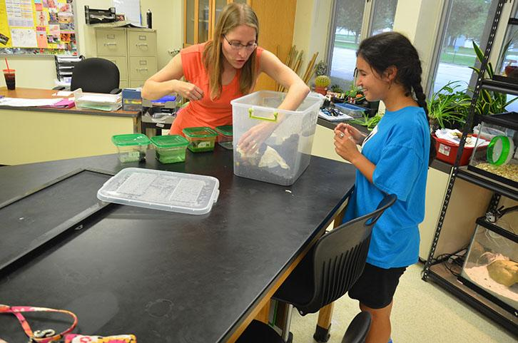 Rollings removes hissing cockroaches from their container while junior Natasha Anderson observes. The club is held in room 208 and sponsored by science teachers Burns and Rollings.