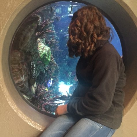 Watching aquatic life through a fisheye-like window sophomore Madi Holm explores the zoo. Animal Science classes went to the zoo to present enrichment items for animals.