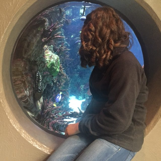 Watching+aquatic+life+through+a+fisheye-like+window+sophomore+Madi+Holm+explores+the+zoo.+Animal+Science+classes+went+to+the+zoo+to+present+enrichment+items+for+animals.