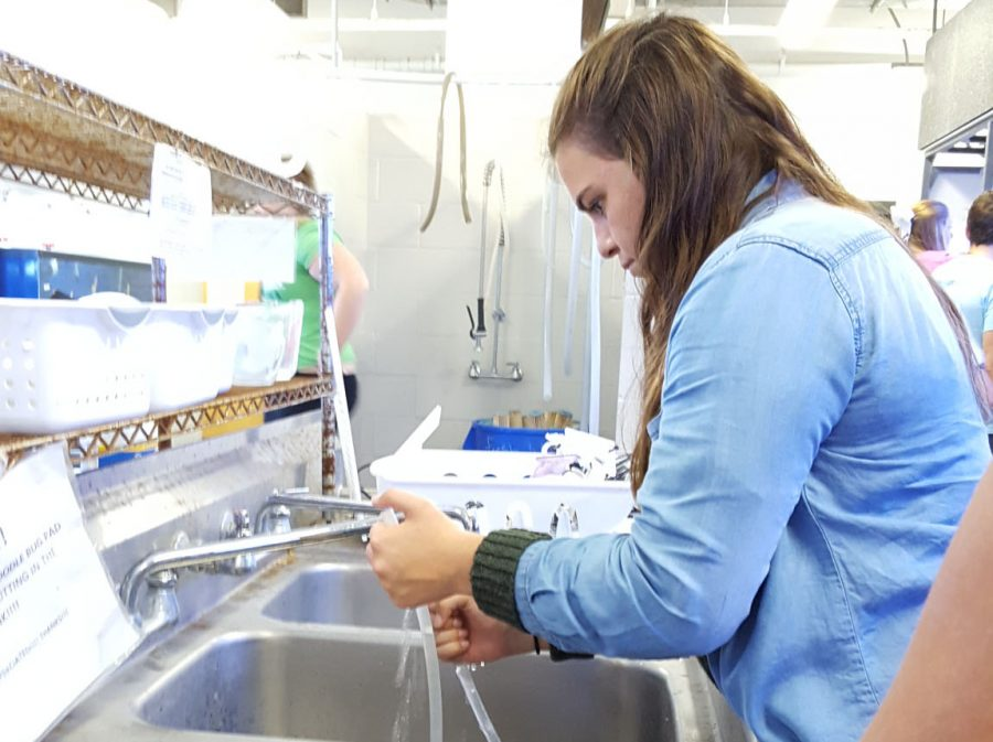 Grace+Henderson+%2717+cleans+tubes+from+the+marine+biology+class+fish+tanks.+Students+in+this+program+have+different+shifts+that+involve+feeding+fish+and+cleaning+tanks.