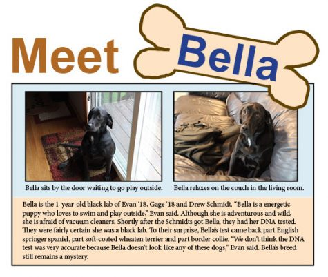 Pet of the Week: Bella