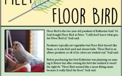 Meet Floor Bird