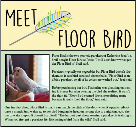 Meet Floor Bird