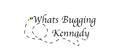 Social Policies - What's Bugging Kennady
