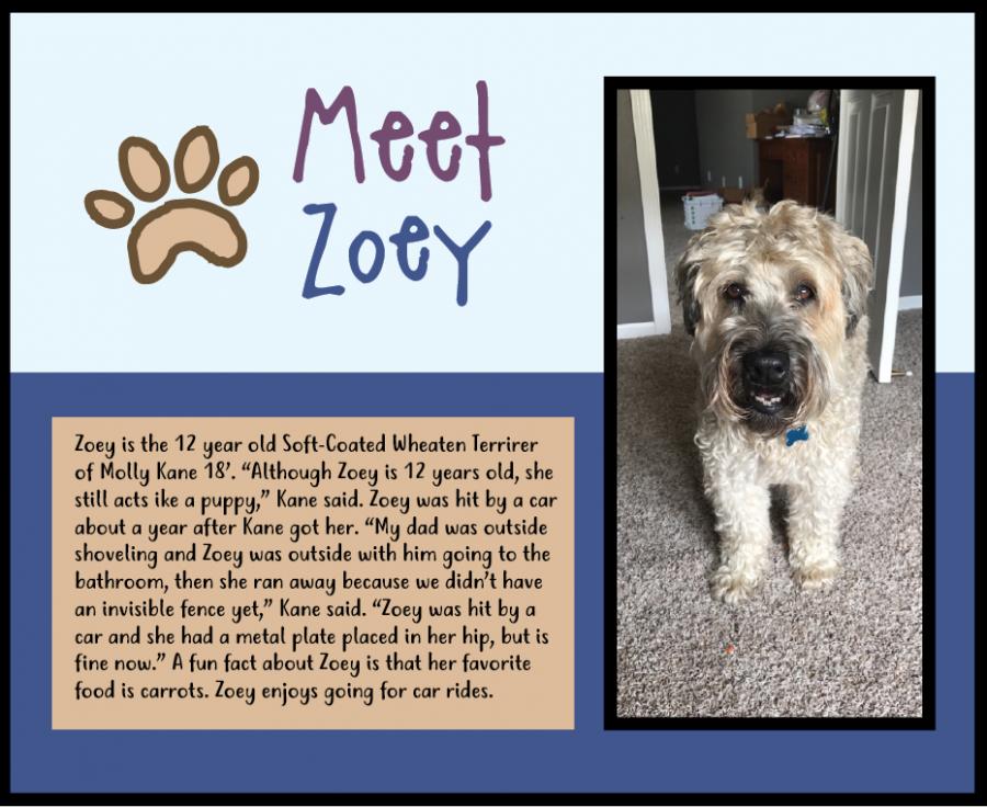 Meet Zoey