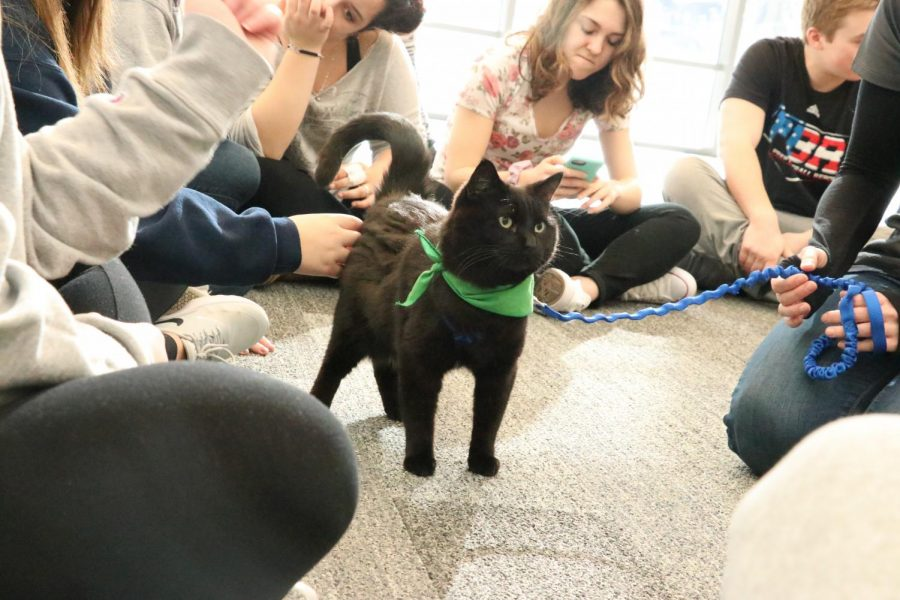 Therapy pets visit students during Dragon Time