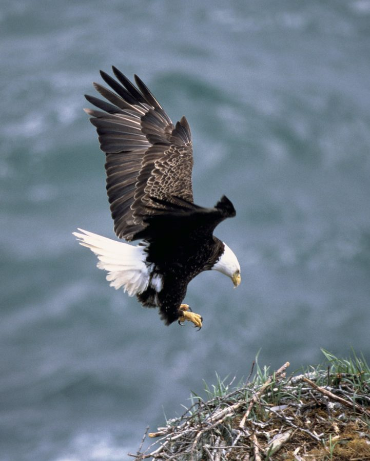An eagle leaving his nest, which can represent an Eagle Scout leaving his Troop