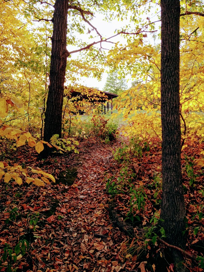 As I gaze through the browning leafs of late October, my mind drifts to early spring when life begins to flourish, wishing it could all happen again.