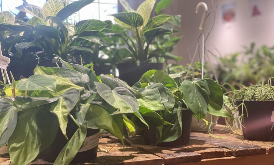 Find these gorgeous plants at Back Alley House Plants.